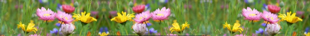 Frühjahr Blumen